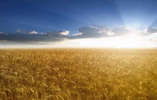 Днес е Летния Атанасовден - летен празник отбелязващ началото на жътвата